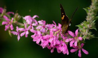 cropped-wildwood_butterfly_desktop1.jpg