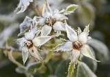 SpringCoverPhotos_FrostyPlant
