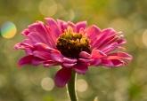 SpringCoverPhotos_ItalianLakeFlower